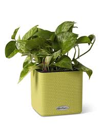 self watering herb planter mini cube self watering herb planter indoor herbs