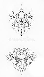 sketch of a lotus on white background stock illustration image