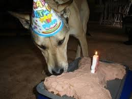 154 best images about adoggable on pinterest dog birthday