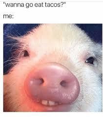 Eat Me Meme - wanna go eat tacos me meme on astrologymemes com