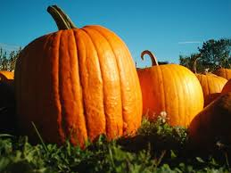 decoration ideas classy image of large orange gourds and pumpkins