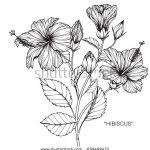 hibiscus flower drawing arst info