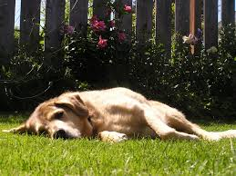 large dog friendly landscaping dog friendly landscaping ideas