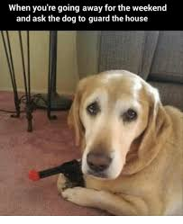 Weekend Dog Meme - when you re going away for the weekend and ask the dog to guard the