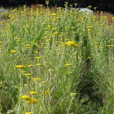 plante vivace soleil vente de 2200 plantes vivaces pépinière lepage achat en ligne
