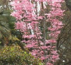 flamingo tree leaves festival of leaves week 3 scrapydo