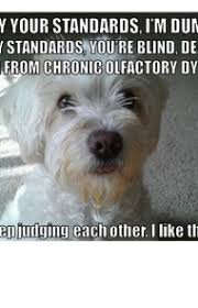 Cute Memes - 45 funny dog memes dogtime