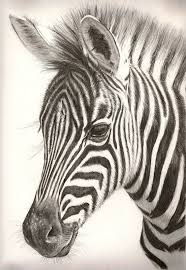 pencil for painting colored pencil zebra drawing search for