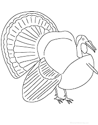 adjectives describing a turkey printable worksheet