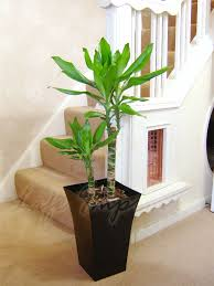 Large Indoor Plants Large Indoor Plant Pot 5 Awesome Exterior With Premium Fiberglass