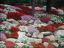Colored Rocks For Garden by Rock Garden With Trees And Full Sun Plants Rock Garden Plants