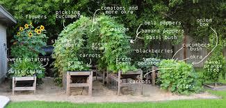Summer Garden Ideas - my bushy summer garden raised urban gardens
