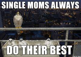 Best Mom Meme - single mom doing her best for her babies meme on imgur