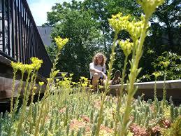Family Garden Brooklyn Brooklyn Greenroof