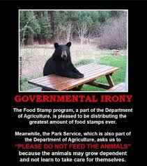 Bears Meme - government irony of bears and welfare recipients picture