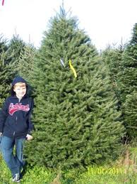shady rest tree farm order live christmas trees online