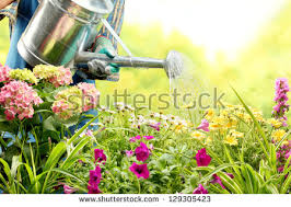 flower garden stock images royalty free images u0026 vectors