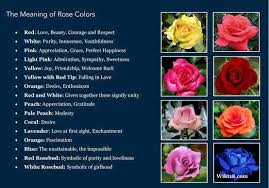 Different Color Roses Lisa Earthgirl U2013 Gardening Tips And Helpful Advice Meanings Of Roses