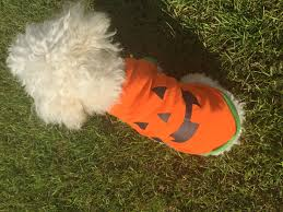 pets dogs orange pumpkin costumes cotton dog shirts puppy clothes