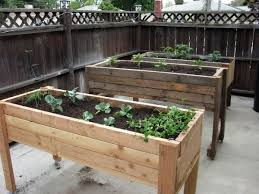 7 steps how to make small home garden with vegetables plant