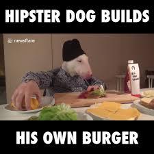 Hipster Dog Meme - hipster dog makes big burger watch or download downvids net