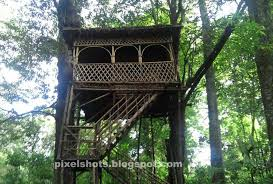 amazon tag wallpapers treehouse observation deck amazon rain