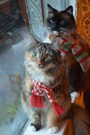 cat christmas best 25 christmas cats ideas on cats doing