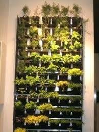 indoor wall garden indoor wall garden best herb wall ideas on kitchen herbs wall