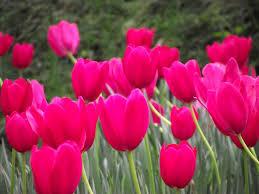 flower garden photos free download the garden inspirations