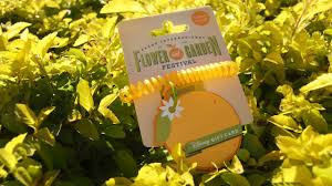 stop and smell the oranges u2013 new disney gift card for epcot