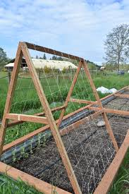 a frame trellis diy for peas and cucumbers zion family