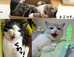 Memes Cats - cats know your meme