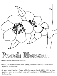 delaware state flower peach blossom coloring page