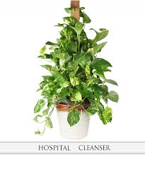 Indoor Flowering Plants by Caring For Healthy Indoor Plants Nanz And Kraft Florists