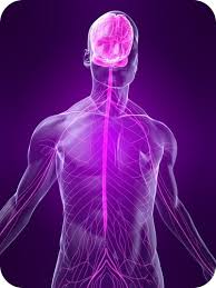 peripheral nervous system ck 12 foundation