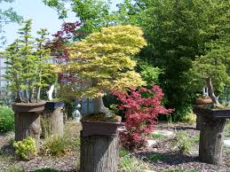 high resolution small landscaping trees bonsai garden amys office