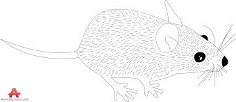 rat outline drawing clipart free clipart design download