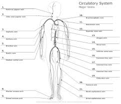 cardiovascular system diagram worksheet the best and most