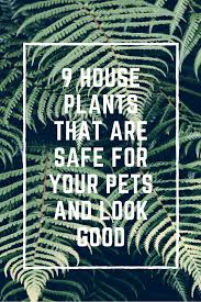 9 house plants that are safe for your pets and look good