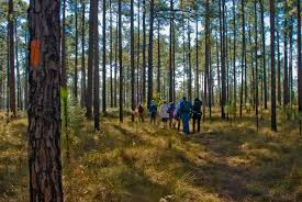 Florida forest images Ocala national forest florida national scenic trail jpg