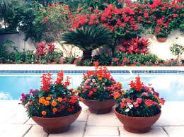 Winter Patio Plants by Container Gardens In The Palm Beach County Landscape Pamela Crawford