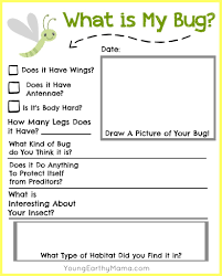 free insect identification printable kids nature science