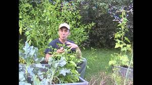 best gardening guru