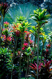hawaiian tropical gardens containing exotic plants amazing