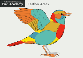 Interactive Muscle Anatomy Bird Academy By Cornell Lab It U0027s Interactive Nature Study