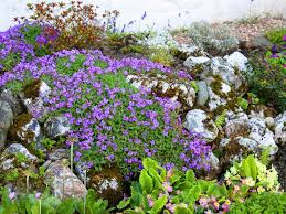 Rock Garden Plants Uk How To Make A Rockery Saga