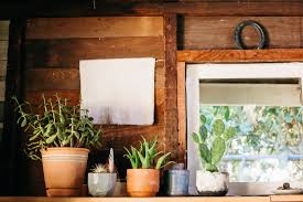 in door plant put in pot vide rubber plant our best tips for growing and care apartment therapy