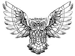 owl raw drawing animals coloring pages for adults justcolor