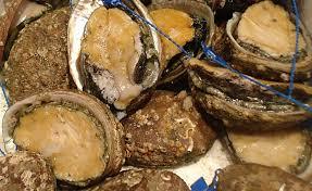 cuisiner des ormeaux ormeau richesse de la mer