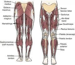 Back Knee Anatomy Knee Anatomy Meniscus Tear Human Anatomy Body
